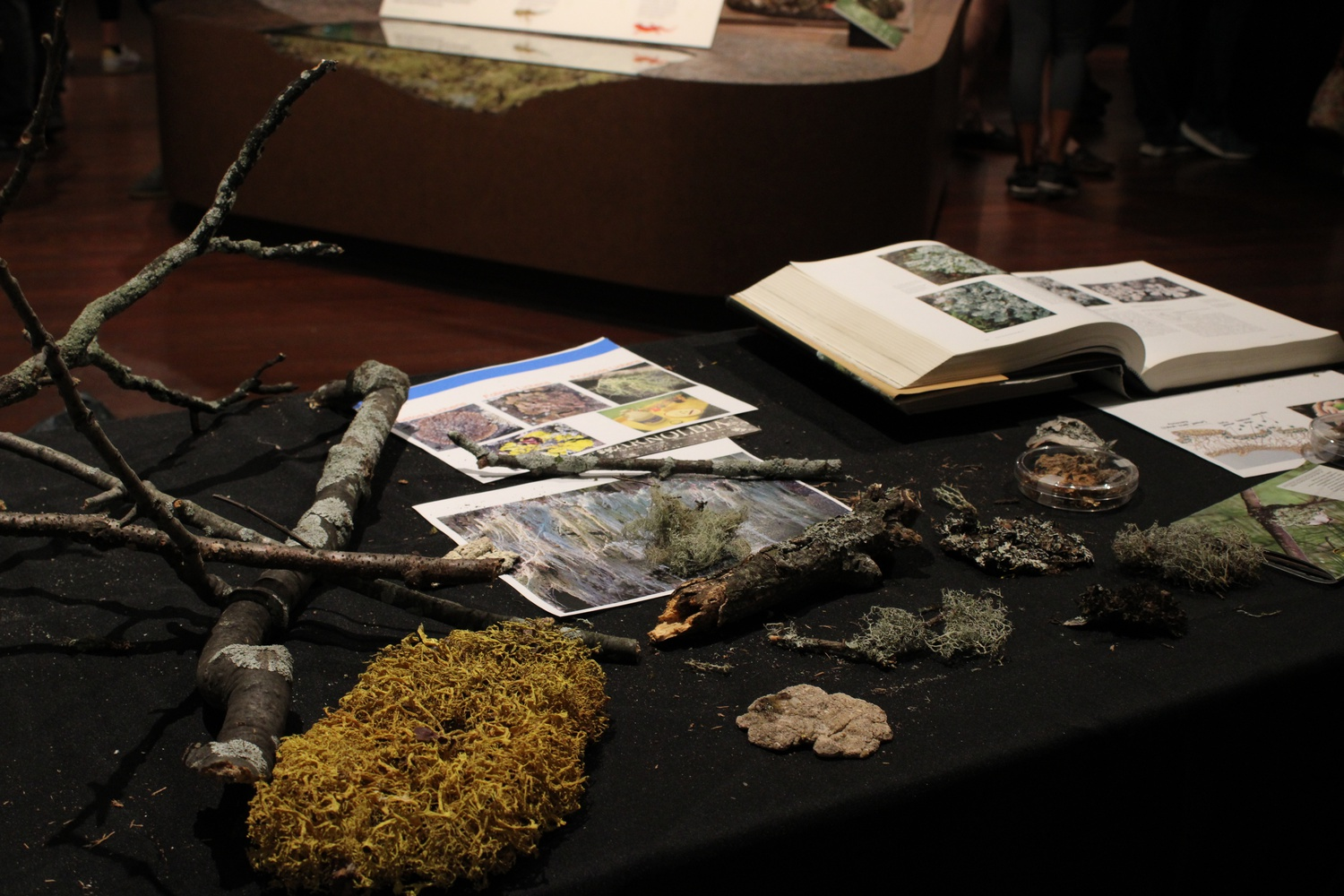 The Fabulous Fungus Fair, led by Harvard students, features a variety of museum collections, displays, and activities surrounding mushrooms, yeasts, and molds.