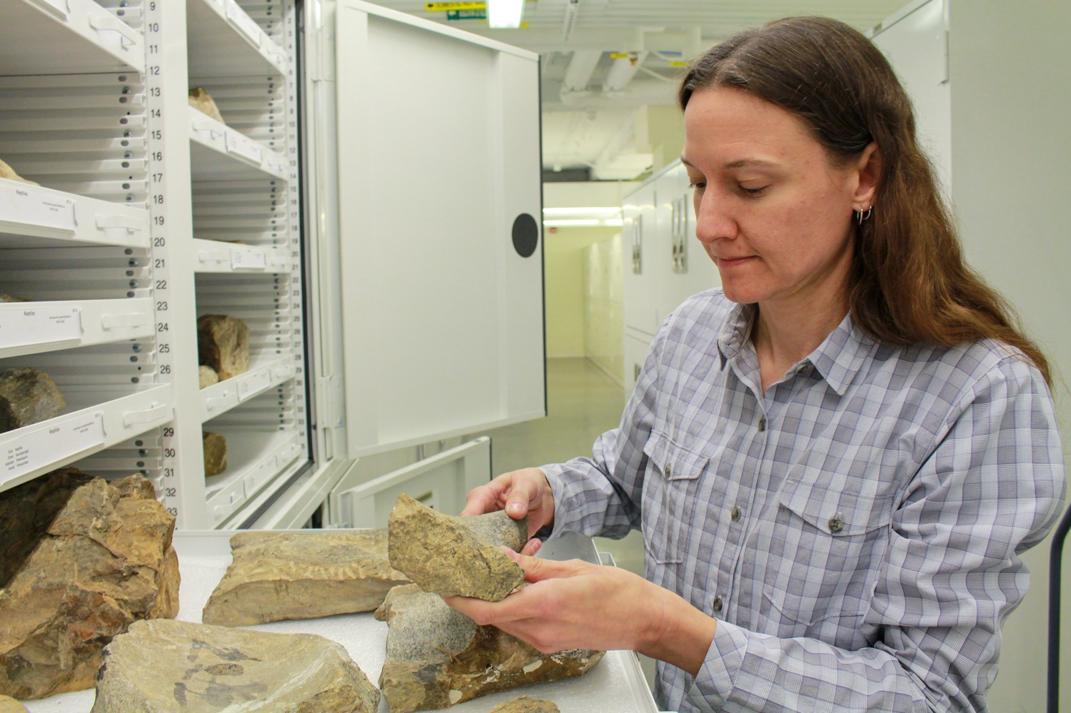 Since February 2001, Jessica Cundiff has worked as a Curatorial Associate in the Verterbrae Paleontology at the Museum of Comparative Zoology, working on projects including a collection renovation, a website redesign, and the digitization of collections data.
