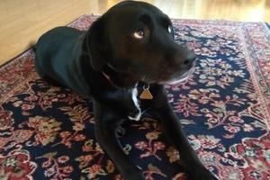 Piper Dog 2
