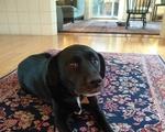 Piper Dog 3