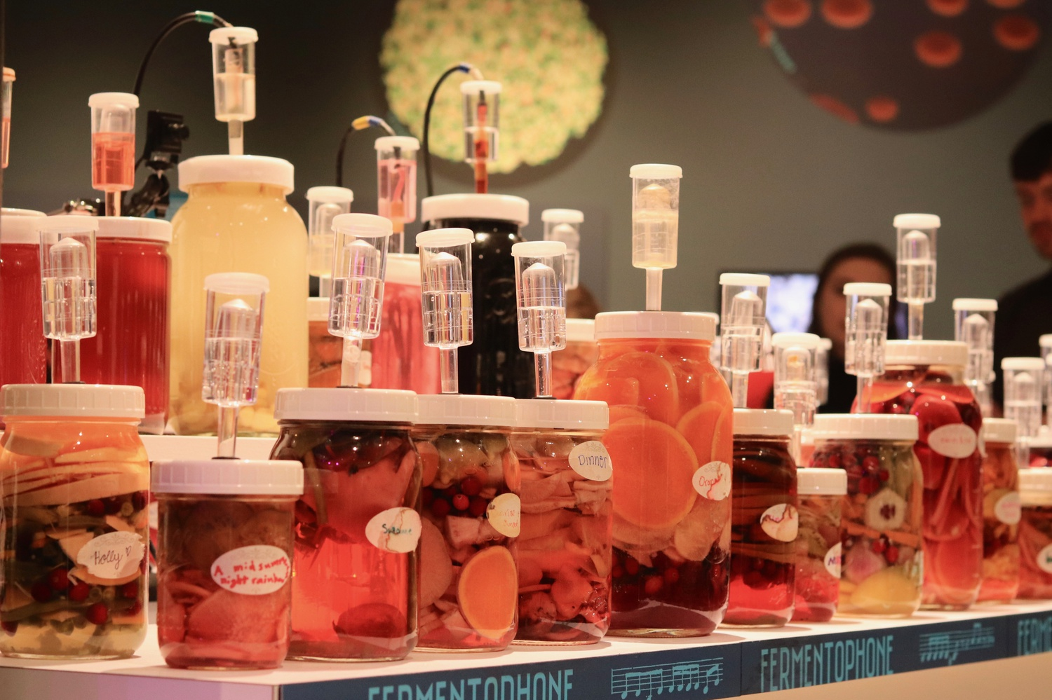 Jars of fermented food, which artist Joshua Pablo Rosenstock uses as musical instruments, are on display at the Museum of Natural History.