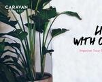 Caravan Wellness Cover