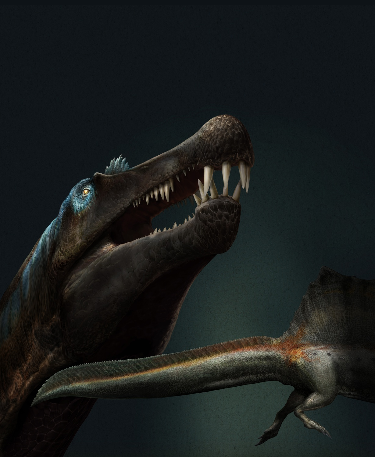 An artist's reconstruction of Spinosaurus, which an international research team recently determined to be the first known swimming dinosaur.