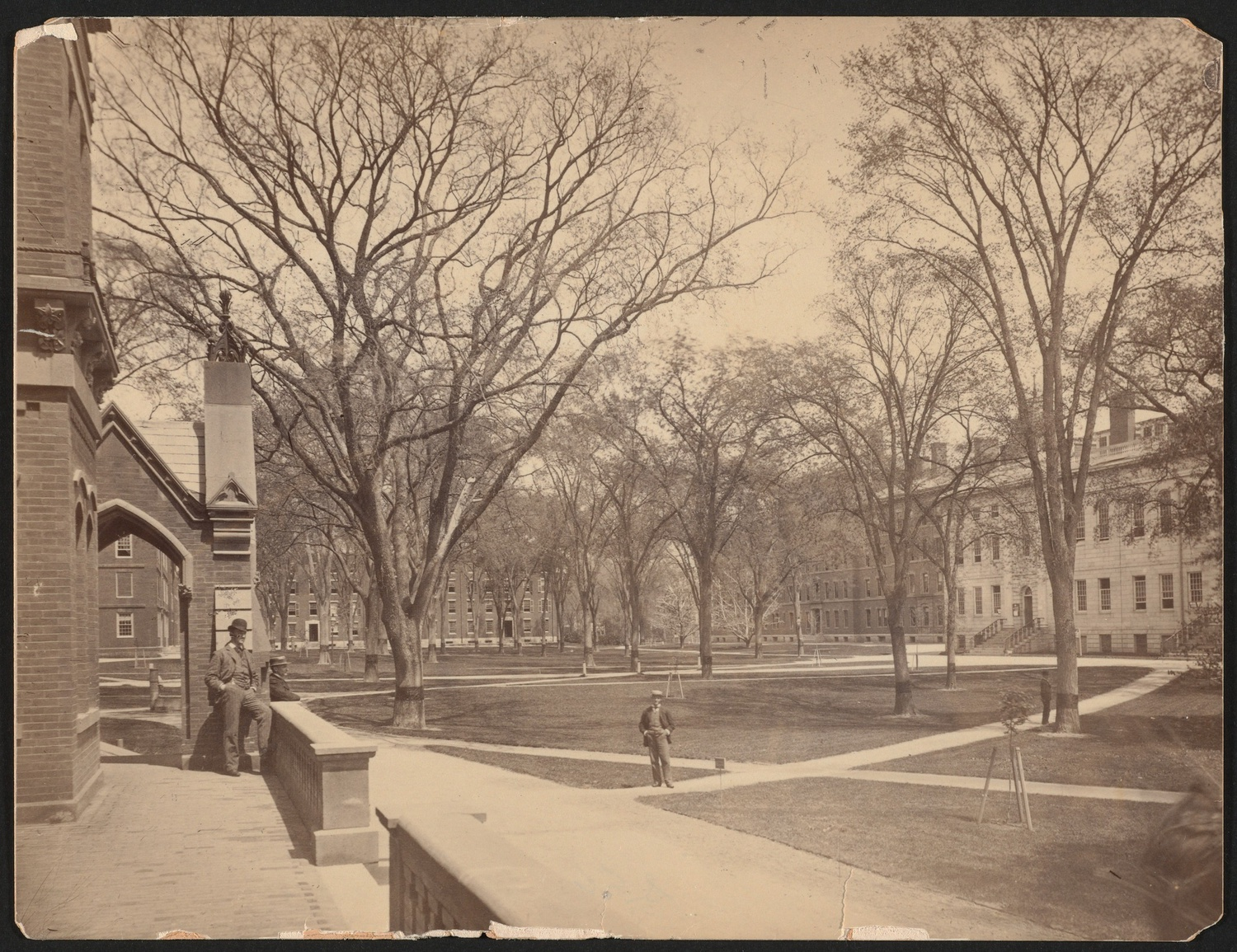 In an old photograph of Harvard Yard, University Hall and various First-year Dorms can be observed.