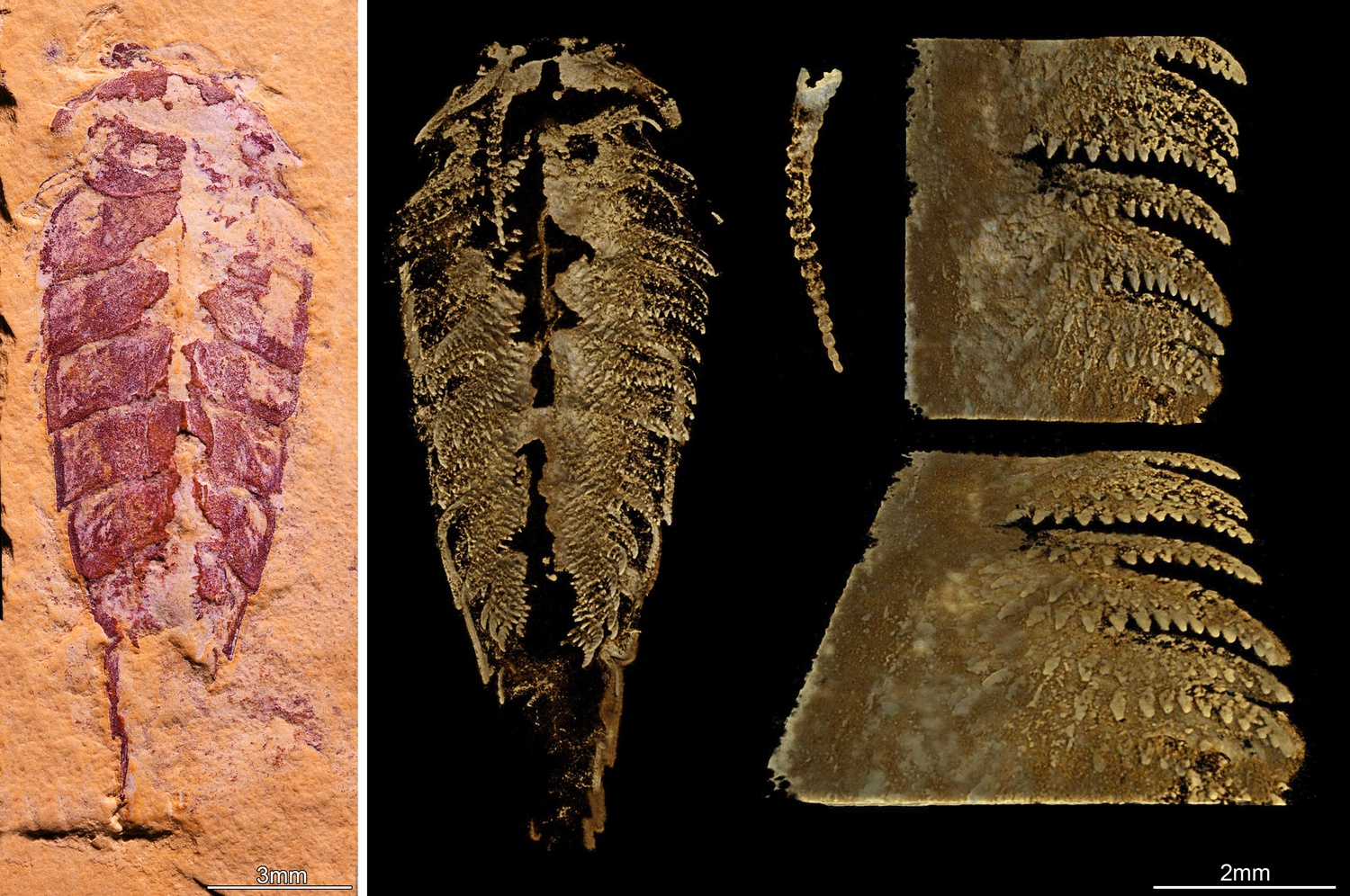 A new Harvard study shed light on the evolution of arthropods.