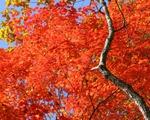 Fall Playlist Leaves Still