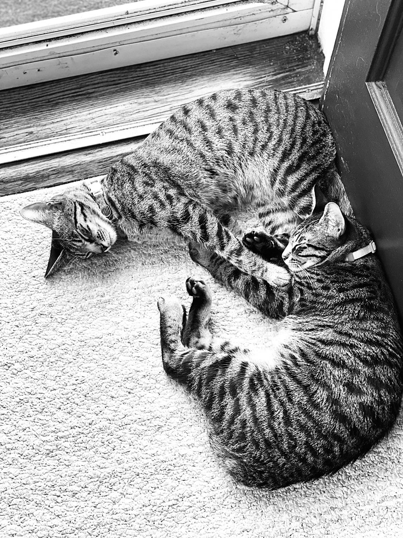 Jiji and Kiki curled up near a doorway.