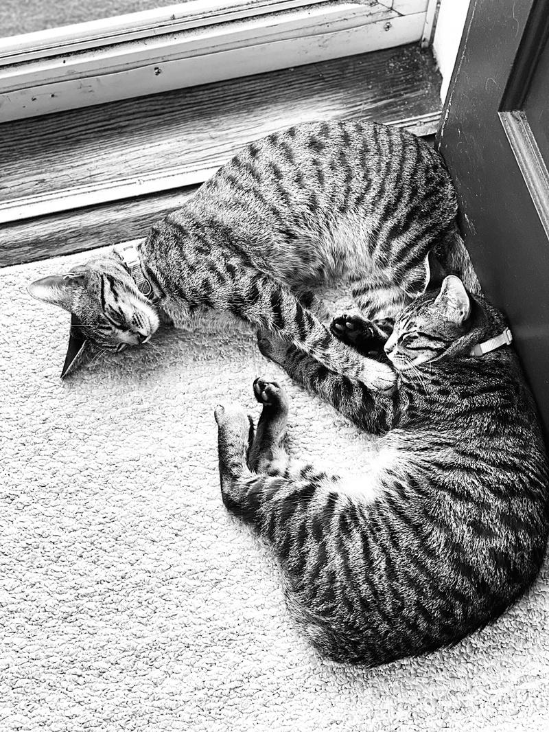 Cats By Doorway
