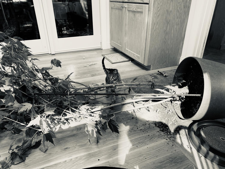 Kiki by a fallen plant.