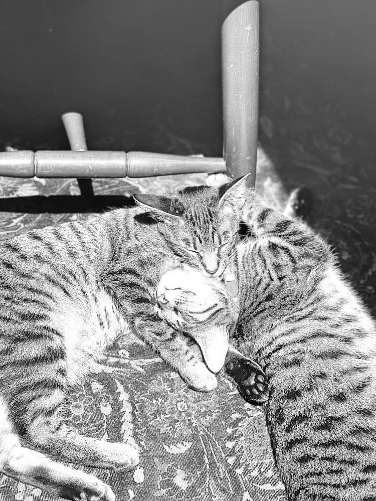 Jiji and Kiki in a pile in the sun.