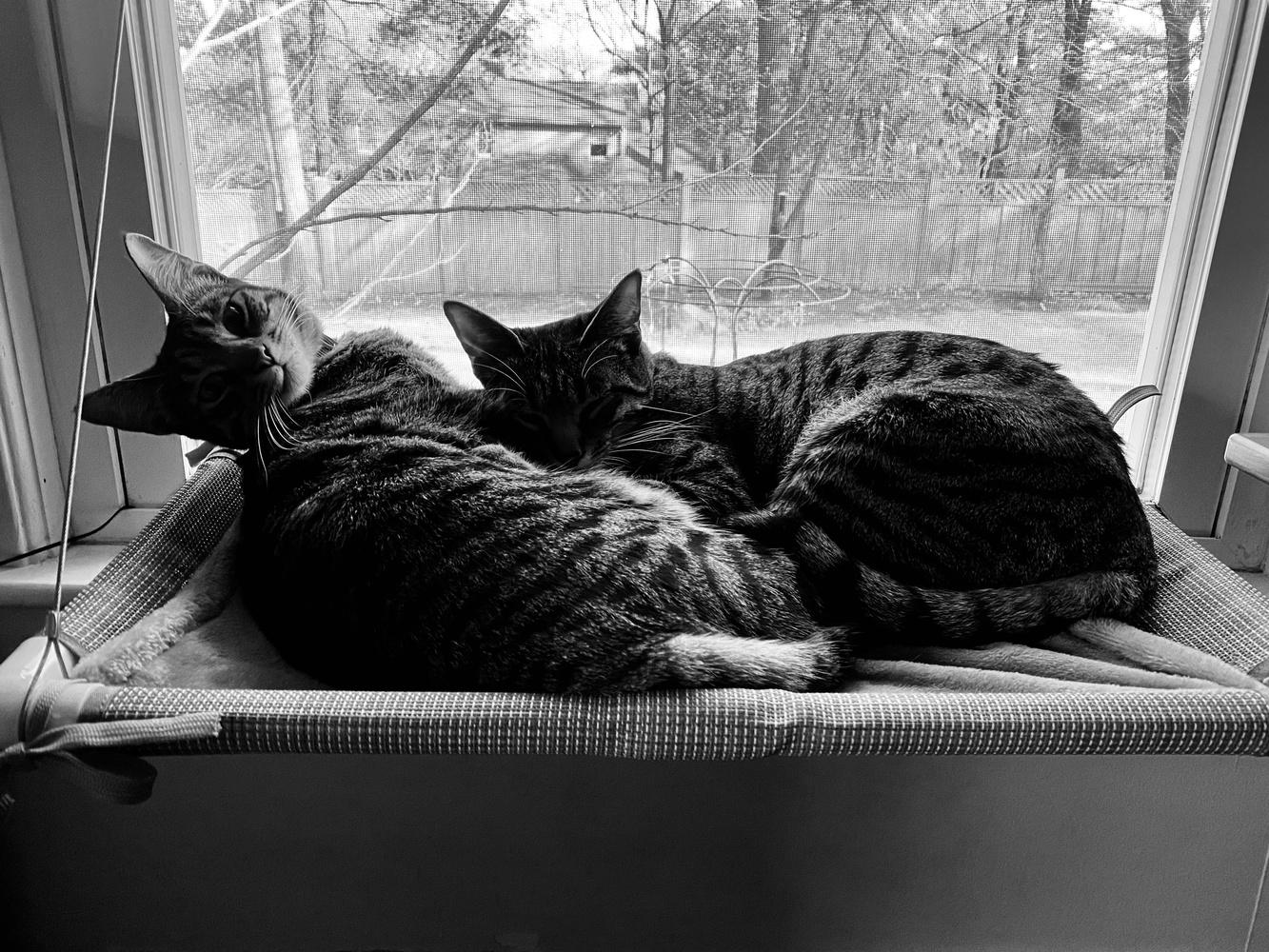 Jiji and Kiki by a window.