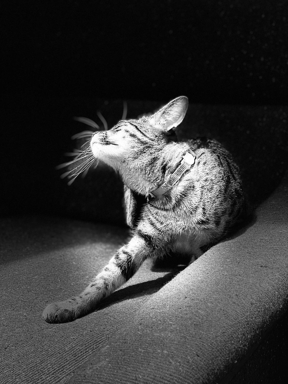 Jiji in the light.