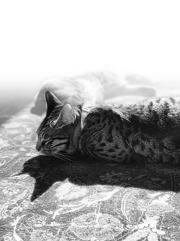 Animal kingdom (Kiki in the foreground).