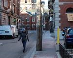 Plympton Street Covid