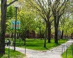 Yard May 2021