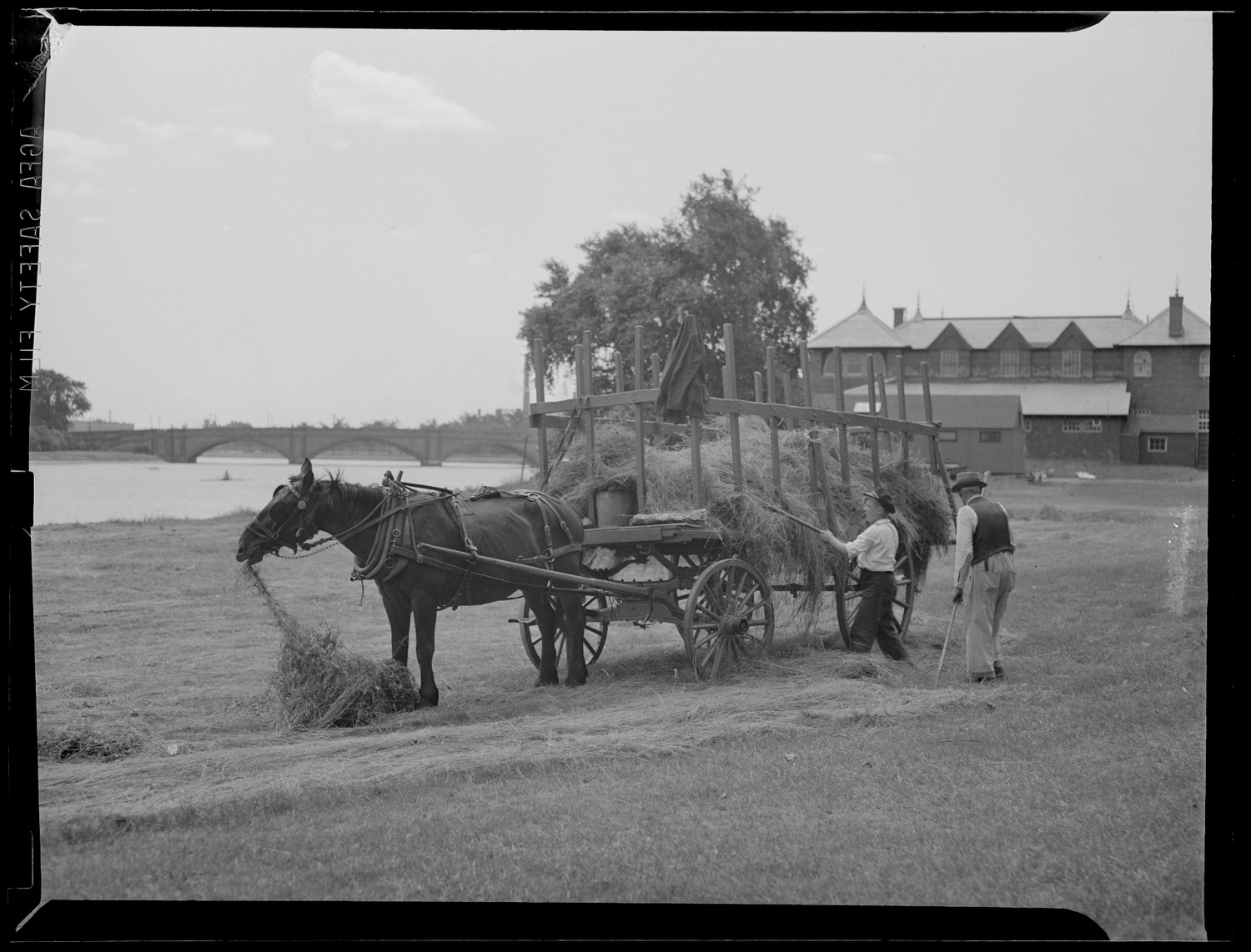 In a photo taken circa 1934–1956, farmers collect hay on a low-lying Allston marsh near where Cumnock Fields and the Harvard Athletic Complex stand today. Anderson Memorial Bridge and Newell Boathouse are pictured in the background.