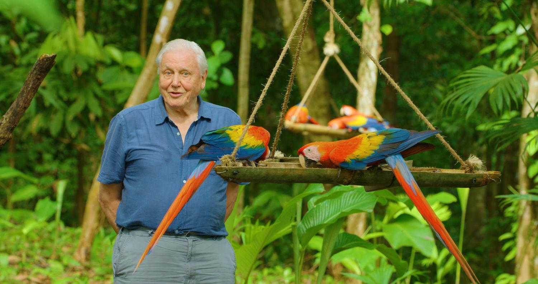 "David Attenborough in ""Life in Colour."""