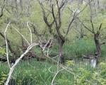 Muddy pond landscape