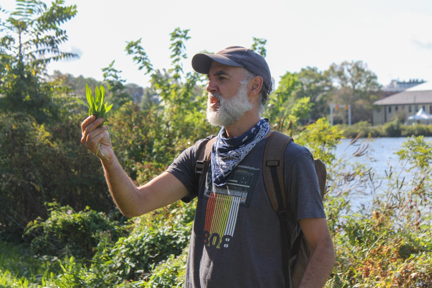 David L. Craft holds up part of a narrow-leaf plantain plant by the Charles River. Craft lead an urban plant foraging tour around Harvard, identifying a variety of different plants for participants.