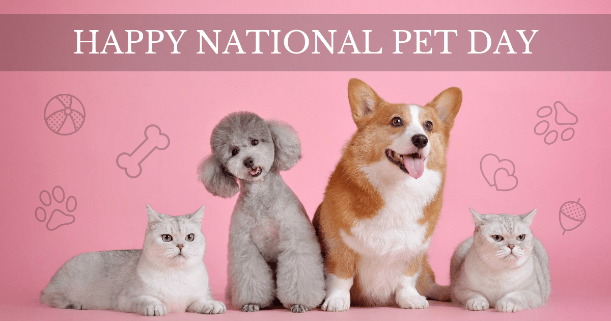 Pink National Pet Day Facebook Post Template