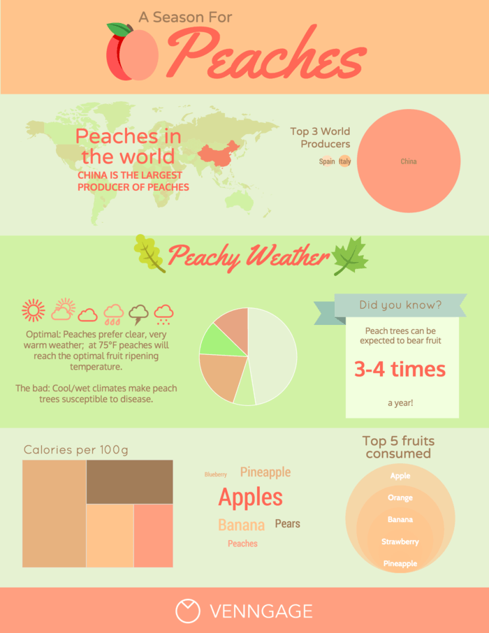 Peach Infographic Template