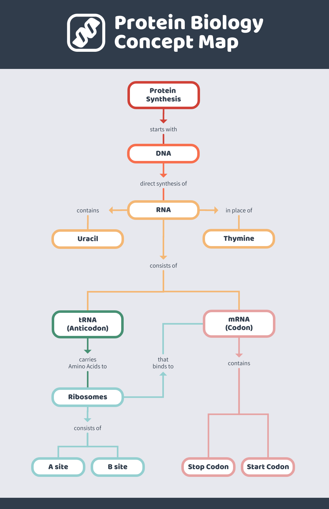 Protein Biology Concept Map Template