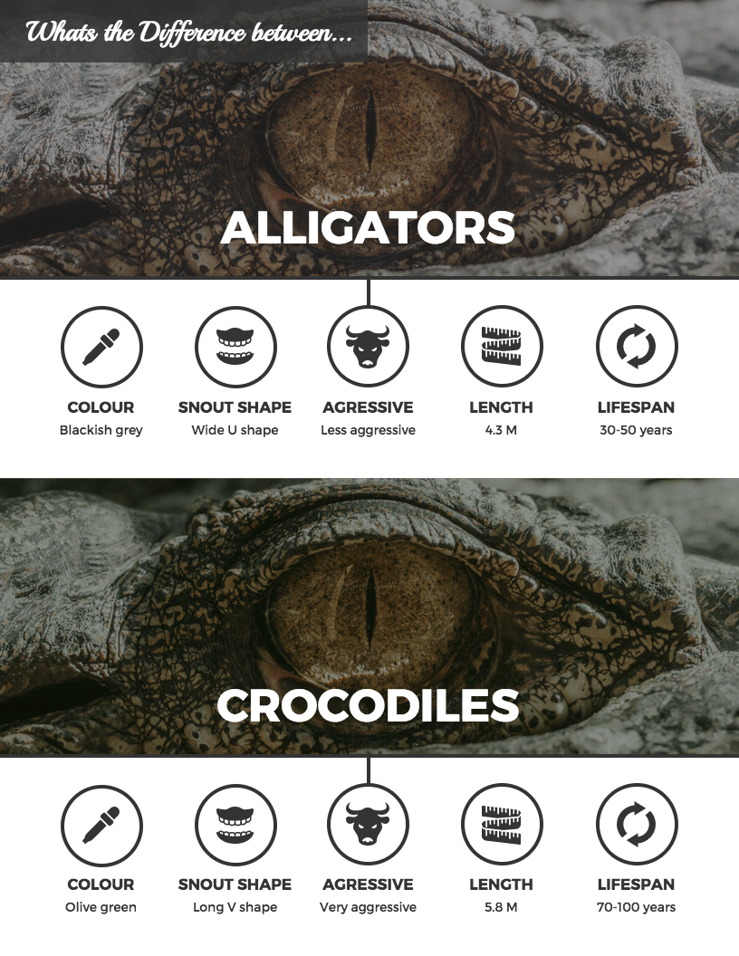 Animal Comparison Infographic Template