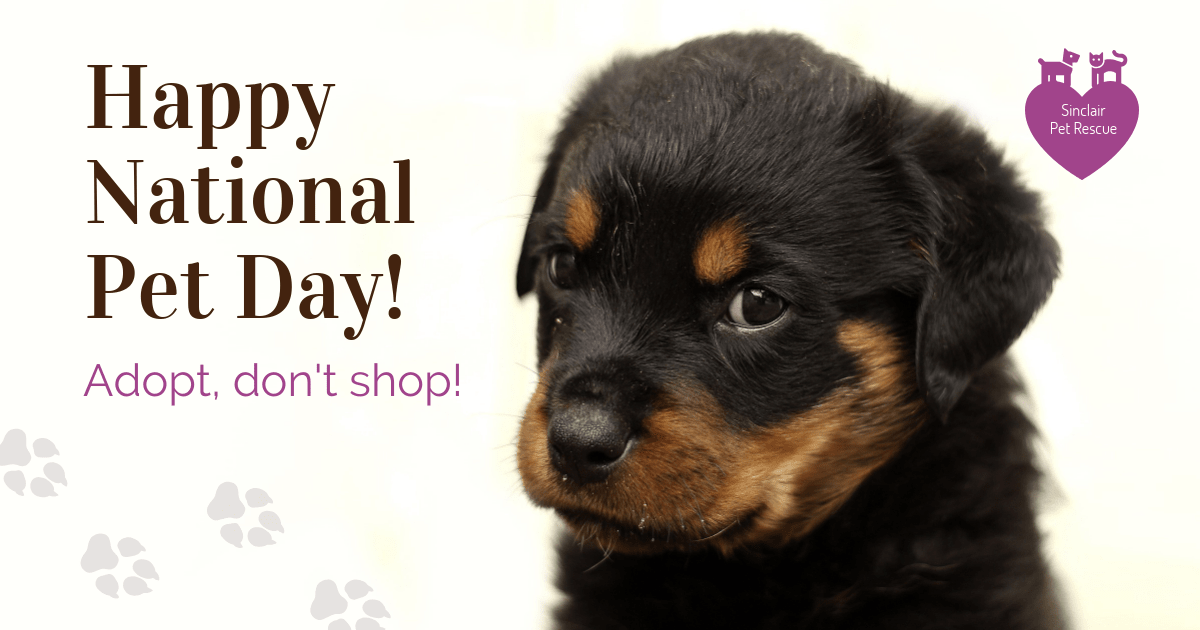 Nonprofit National Pet Day Facebook Post Template