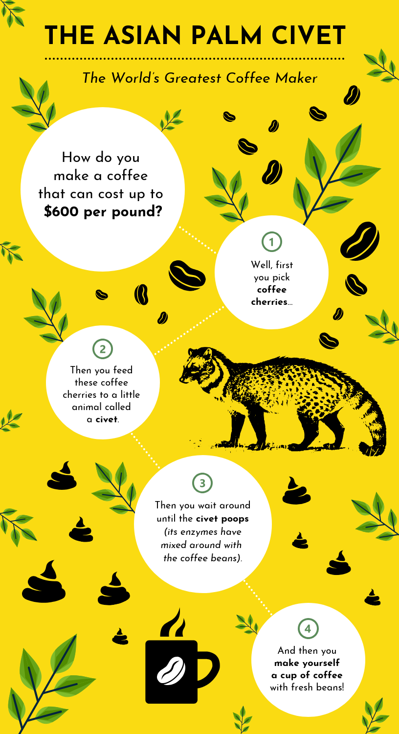 Animal Facts Infographic Template