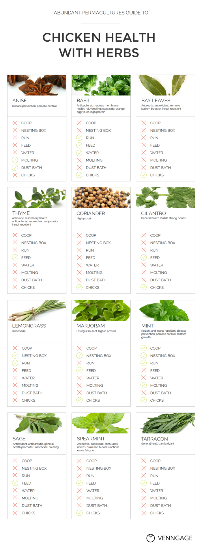 Herbs and Spices Infographic Template
