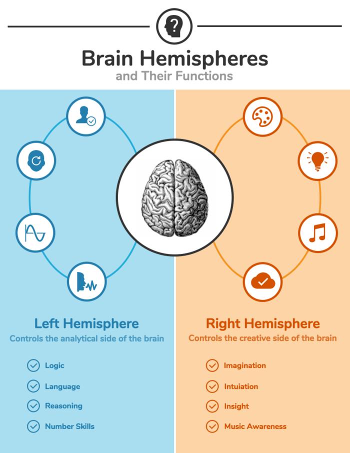 Left and Right Brain Comparison Template