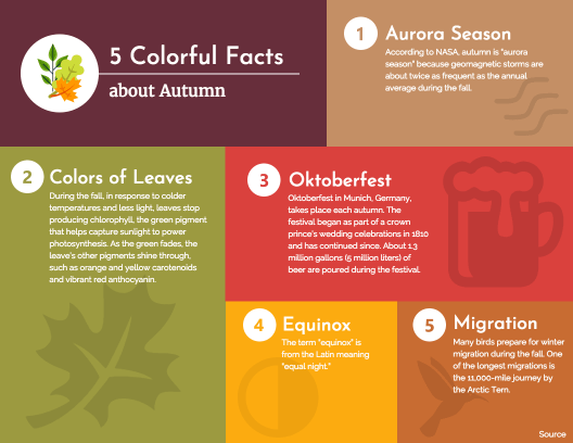 5 facts about autumn infographic template - Template