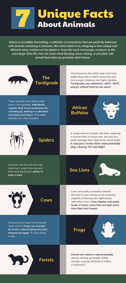 Infographic templates designs venngage 7 unique facts about animals infographic template cheaphphosting Image collections