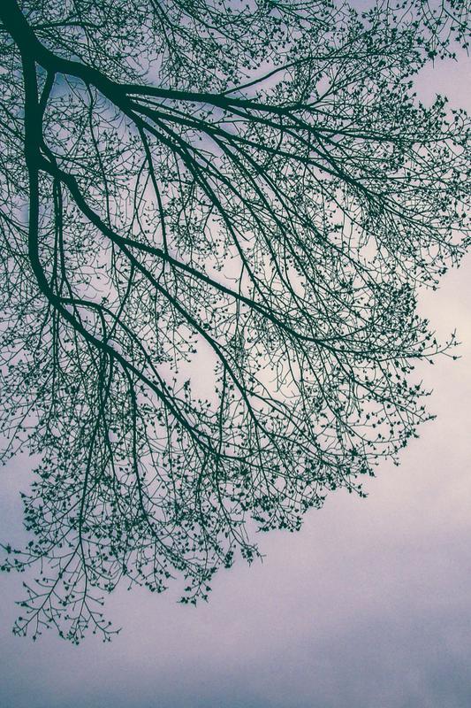 Wednesday Women's Spring Study - Restless, by Jennie Allen