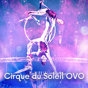 image Cirque du Soleil OVO