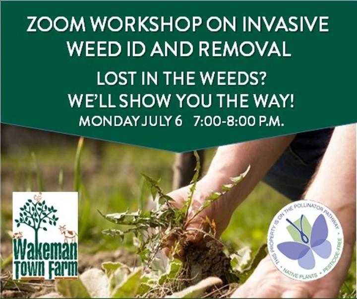 Horizontal_weed_workshop_image
