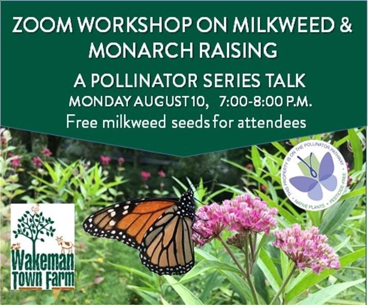 Horizontal_aug_10_milkweed_monarchs