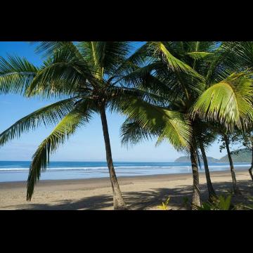 Traslado desde el Bosque Nuboso de Monteverde hacia Playa Jacó