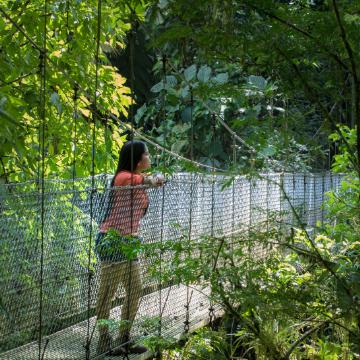 Caminata a Puentes Colgantes  Mapache Tours