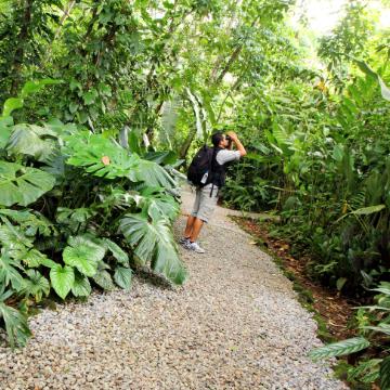 Nature Walk at Ecogolical Park  & Butterfly Garden Danaus Mapache