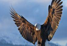 Titathink-Eagle