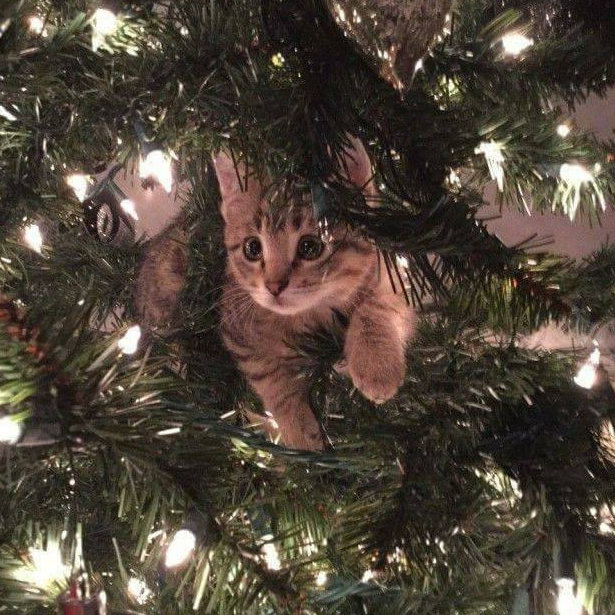 Merry Christmas cat