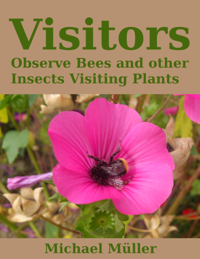 Visitors: Observe Bees and other Insects visiting plants