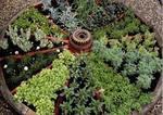 Herbs_garden
