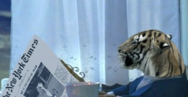 tiger reading NP