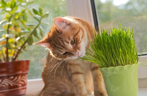 catnip seller
