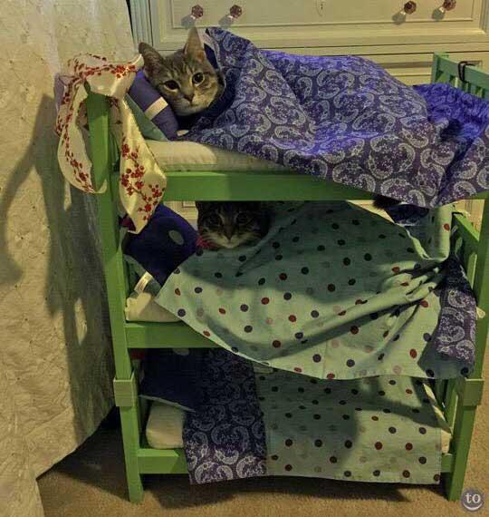 cat-sitter