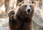 3-Lessons-Freelancers-Can-Learn-from...-Bears