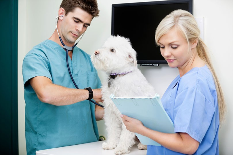 How To Become A Veterinary Technician