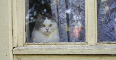 cat-wants-to-kill-me
